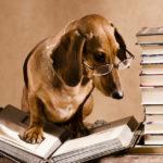 Il Cane e la legge