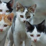 Sterilizzate i gatti