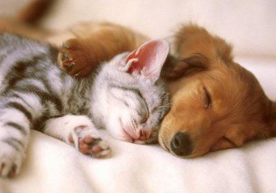 Le regole per Cani e Gatti con il freddo